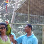 Parrot on my shoulder